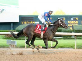 Super Stock seeks a Texas Derby title to go with his Arkansas Derby victory last month. The inaugural Texas Derby is Memorial Day at Lone Star Park. (Image: Coady Photography)