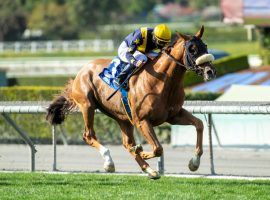 United is one of the top turf horses on the West Coast. He's won five of his last seven races coming into Saturday's Grade 2 Charles Whittingham Stakes at Santa Anita Park. (Image: Benoit Photo)