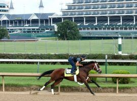 Art Collector and regular rider Brian Hernandez Jr. worked out four times at Churchill Downs. The one-time Triple Crown race threat returns for his 4-year-old campaign in the June 25 Kelly's Landing Overnight Stakes at Churchill Downs. (Image: Coady Photography)