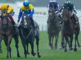 Campanelle (left) and Dragon Symbol needed a photo finish and stewards' inquiry to decide the Group 1 Commonwealth Cup at Royal Ascot. Campanelle prevailed after Dragon Symbol was cited for interference. (Image: Rex Features)