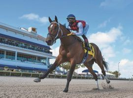 Collaborate returned to the form that brought him this 12 /12-length maiden win in February last Sunday. He won a Gulfstream Park allowance by 5 1/4 lengths. (Image: Coglianese Photo)