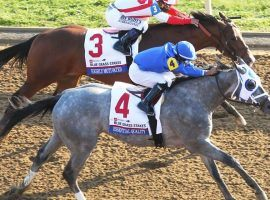Essential Quality's Blue Grass Stakes wire victory over Highly Motivated was the Champion 2-Year-Old's fifth consecutive win. After finishing fourth in the Kentucky Derby, the colt seeks to rebound as the 2/1 morning-line favorite in the 153rd Belmont Stakes. (Image: Kentuckyderby.com)