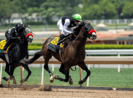 Hot Rod Charlie hit the board in his last five races: two wins, a second and two thirds. Four of those came in graded stakes races, making him a legitimate Belmont Stakes threat. (Image: Benoit Photo)