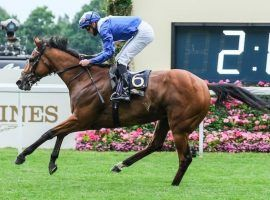 Lord North took command of last year's Prince of Wales's Stakes. Yet he's not the favorite for Wednesday's lone Group 1 race at Royal Ascot. (Image: Racenews)