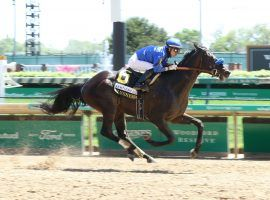 Maxfield won his sixth race in seven career starts at April's Grade 2 Alysheba Stakes. He is undefeated at Churchill Downs coming into Saturday's Grade 2 Stephen Foster. (Image: Churchill Downs/Coady Photography)