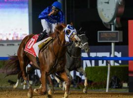 Jockey Luis Saez and Mystic Guide quieted the few critics they had in March's Dubai World Cup. The 4-year-old returns for Saturday's Grade 2 Suburban at Belmont Park. (Image: Mathea Kelly/Dubai Racing Club)