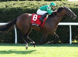 Raging Bull won this third Grade 1 race at April's Maker's Mark Mile at Keeneland. He faces non-Grade 1 competition for the first time since October 2018 in Saturday's Grade 3 Poker Stakes at Belmont Park. (Image: Coady Photography)
