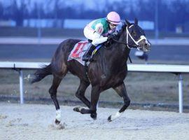 Set Piece, shown here winning the Prairie Bayou last New Year's Eve, took a big step toward breaking into the front rank of older male turf horses with his Grade 2 Wise Dan win Saturday. (Image: Coady Photography)