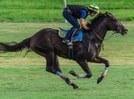 Ete Indien's last workout came here, in June 2020. The one-time Kentucky Derby prospect returns to action Sunday at Gulfstream Park after nearly 13 months off (Image: Dana Wimpfheimer)