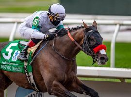 Louisiana Derby winner Hot Rod Charlie hasn't finished worse than third in his last six races. He looks for his first Grade 1 victory as the 6/5 favorite in Saturday's Haskell Stakes at Monmouth Park. (Image: Jamie Newell/TwinSpires.com)