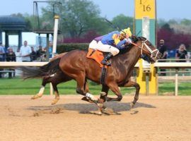 Mr. Wireless broke his maiden with this March victory at Oaklawn Park. He is expected to provide competition to favorite Fulsome in Wednesday's Grade 3 Indiana Derby. (Image: Coady Photography)