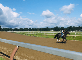 Horses under quarantine after a case of Equine Herpesvirus-1 can train on Saratoga's Oklahoma Training Track after the rest of the barns get their works in. (Image: Francesca Le Donne)