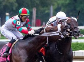 Firenze Fire bit off more than he could chew, savaging Forego Stakes rival Yaupon in deep stretch. Yaupon survived the sudden savaging, winning as the 2/1 favorite. (Image: Skip Dickstein)