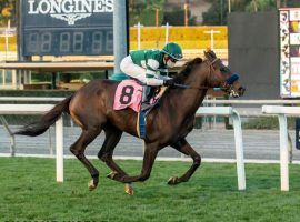 Rock Your World won his first three races before stumbling in two of the Triple Crown events. He's nominated for the   Grade 1 Pacific Classic at Del Mar. (Image: Hronis Racing)