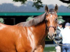 Nobody has looked Flightline in the eye at the end of his first two races. He won a Sunday Del Mar allowance optional claimer by 12 3/4 lengths, clocking the best Beyer Speed Figure by an American horse this year. (Image: West Point Thoroughbreds)