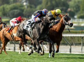 Gregorian Chant (2) won three consecutive sprints earlier this season. He tackles Santa Anita Park's unique downhill turf course for the first time Friday in the Grade 2 Eddie D Stakes. (Image: Benoit Photo)