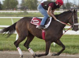H C Holiday is the lukewarm favorite to win the second jewel of Canada's Triple Crown: Tuesday's Prince of Wales Stakes at Fort Erie.(Image: Michael Burns Photo)