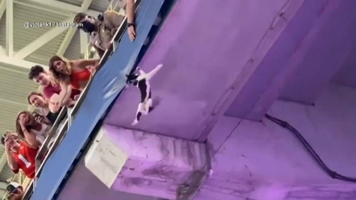 Cat Catch Miami video sepak bola cooelege jatuh