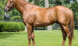 It now costs 2 1/2 times more to breed a mare or filly to 2017 Horse of the Year Gun Runner. He is off to a promising stallion career, based on five graded stakes wins among his juvenile progeny. (Image: Three Chimney Farm)
