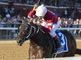 Gunite showed off his versatility winning the Grade 1 Hopeful at Saratoga last month. He comes with 4/1 morning-line value for Saturday's Grade 1 Champagne Stakes at Belmont Park. (Image: Sarah Andrew)